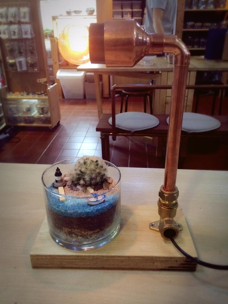 Lamp + terrarium